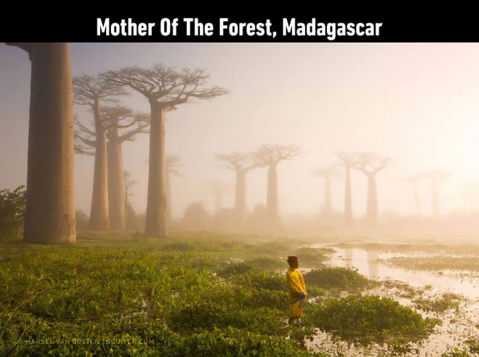 mother of the forest