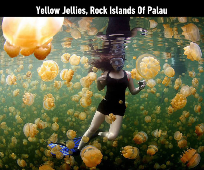yellow jellies