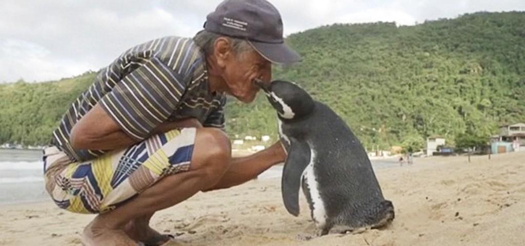 Dindim penguin kiss