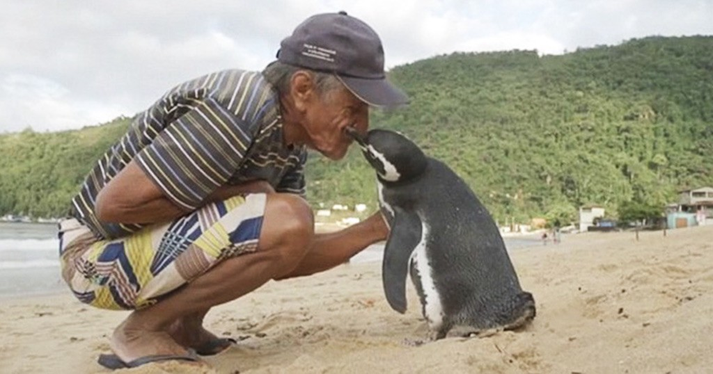 Dindim penguin kiss