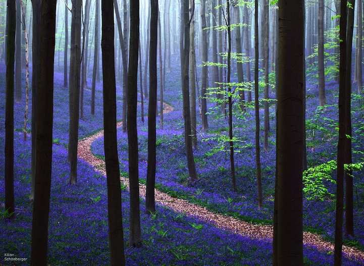 blue-forest