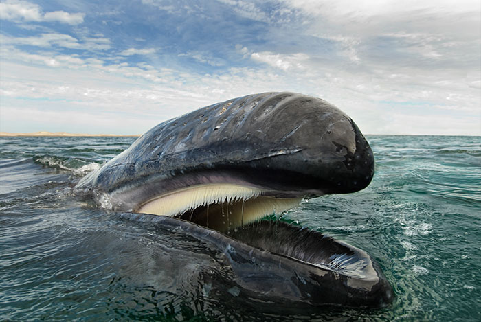 dolphins-whales