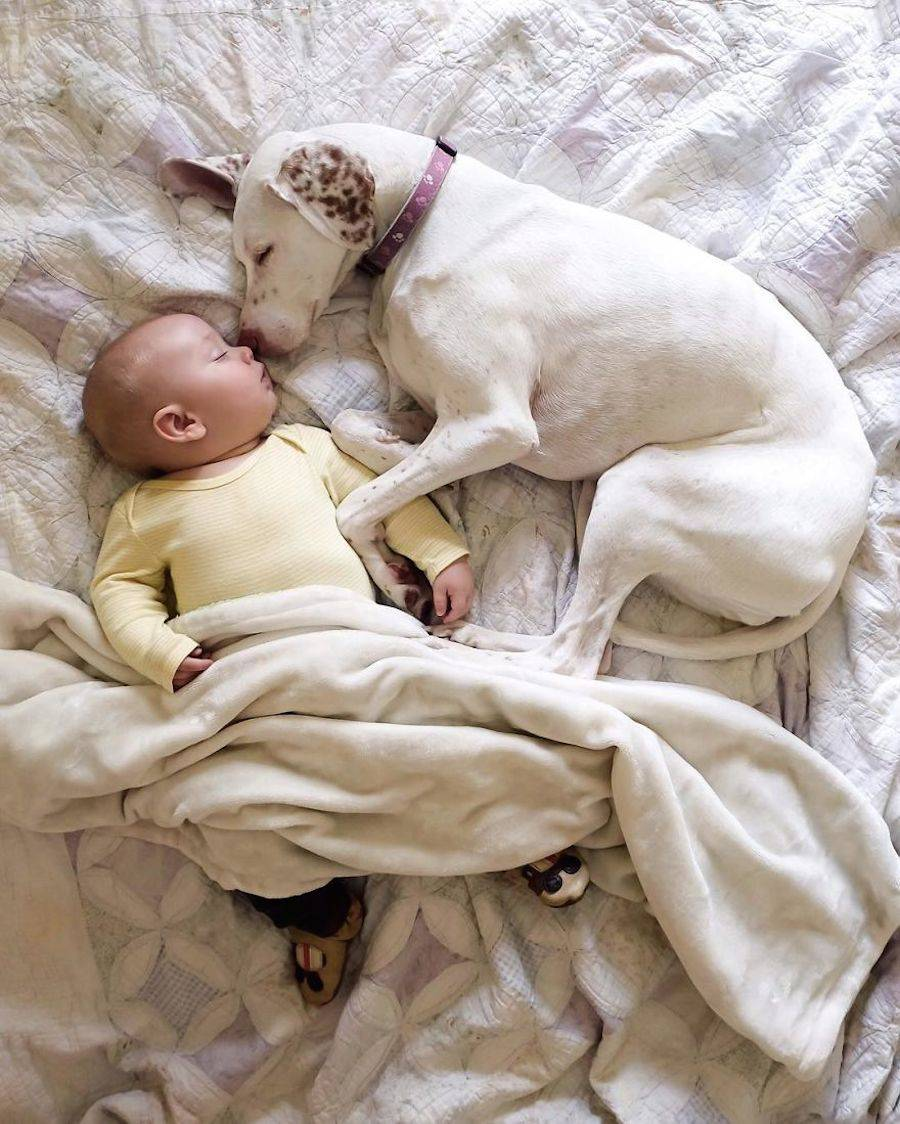 baby-dog