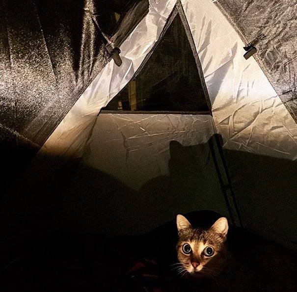 camping-with-cat