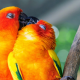 love-animals