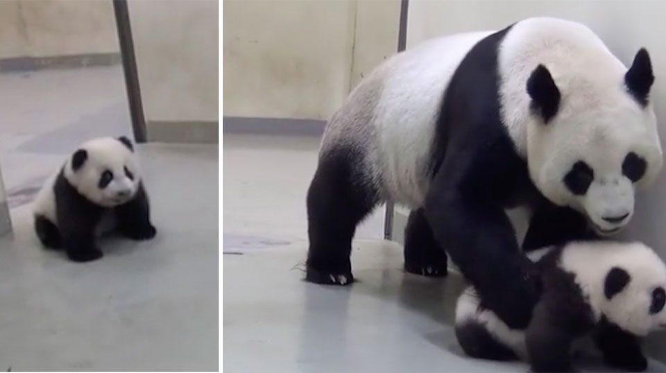 panda-mwro