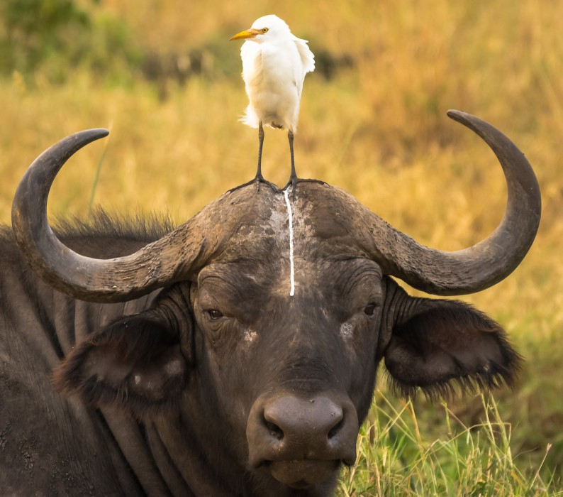 comedy-wildlife-photo