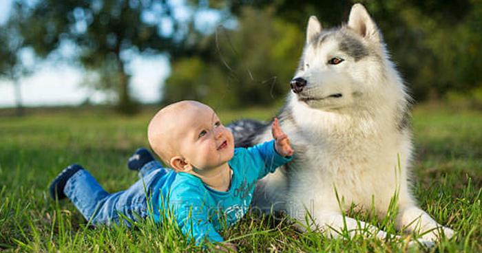 husky-mwra