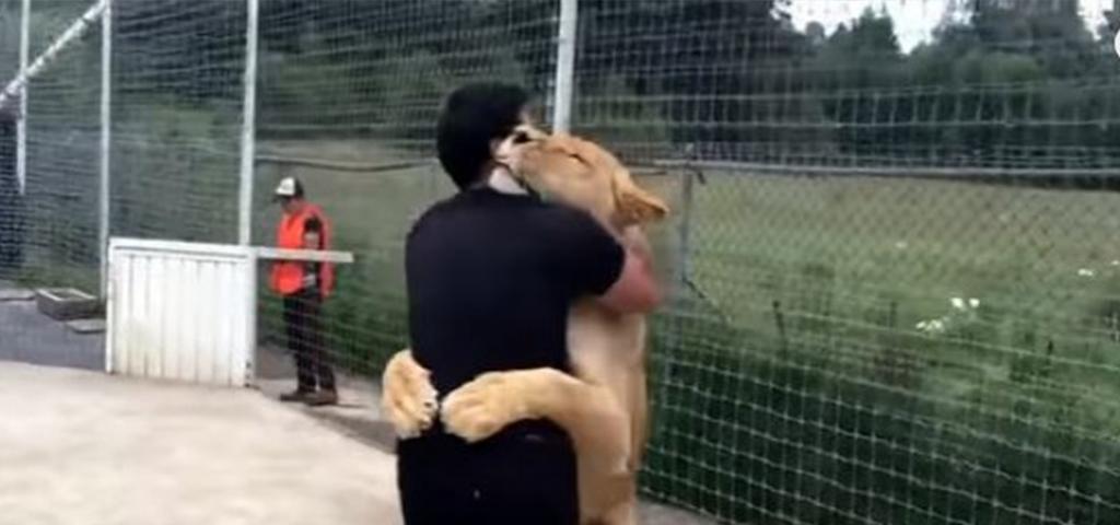 lion-hug