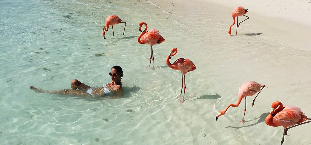 flamingo-beach